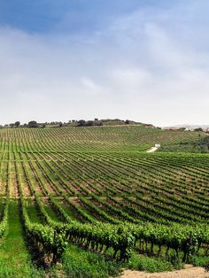 Want to leave and go live on a vineyard<3