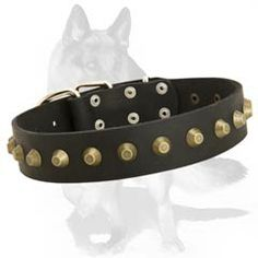 #German #Shepherd #Leather #Collar with #Brass #truncated #cones $34.90 #Vintage #Goldish #Pyramids on Extraordinary #smooth #surface #canine #equipment - #customized #pet #supply for #showy and #regular #walking.