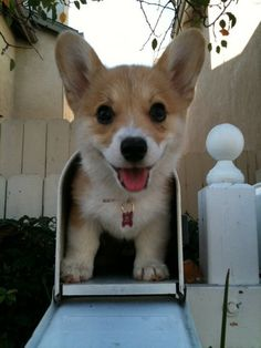 Special delivery.... of cuteness!!