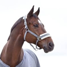 To celebrate our Spring Summer Collection launch we are giving away the lovely Horze Howard Halter  padded in soft fleece at the noseband and crown for a touch of comfort while maintaining classic style. Comment for the chance to win (EU US and Canada). The winner  will be announced on Friday! (the US launches the collection on Thursday)  And Congratulations to the winner of Tuesdays' giveaway @xxcosgrave_avaxx  Please send an e-mail to pr@horze.com to claim your prize!