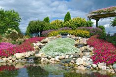 Stachelnüsschen, Kupferteppich und Steinkraut - mit diesen Stauden steht Ihr Steingarten in voller Blüte!