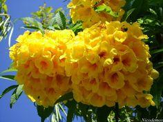 Resultado de imagem para flor amarela