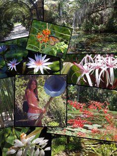 McKee Botanical Garden, Vero Beach