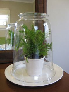 While the majority of the terrariums that we've encountered call for moss, soil and pebbles to create a nice little ecosystem (some even require distilled water and activated charcoal), we rigged up a pretty indoor greenhouse for one lucky little fern Indoor Greenhouse, Indoor Garden, Indoor Plants, Terrarium Diy, Glass Terrarium, Terrariums, Glass Garden, Garden Art, Office Plants