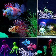 Aquarium Corals + C
