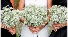 Bulk Baby's Breath for sale in USA and Canada. We offer Gypso of all kinds at wholesale prices with free shipping. Buy Baby's Breath also known as Gyp or Gypsophila for wedding bouquets and arrangements.
