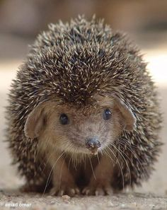 Animals 🙈 - Animals, animals wild, animals funny, animals cutest, animals and pets Cute Creatures, Beautiful Creatures, Animals Beautiful, Nature Animals, Animals And Pets, Wild Animals, Cute Baby Animals, Funny Animals, Photo Animaliere