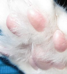 pink toe beans