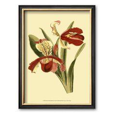 Art.com Orchid Splendor I Framed Art Print, Multicolor