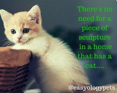 There is no need for a piece of sculpture in a home that has a cat! @easyologypets