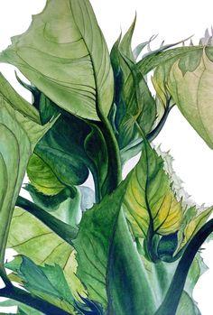Sunflower Leaves - large botanical print, 11 x 16 in, sunflowers, green, leaves, botanical watercolor, botanical illustration.