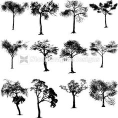 Nature Tree Silhouettes Vector Collection   StockGraphicDesigns