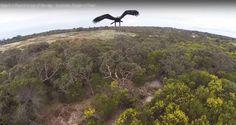 Lee Águila vs drone: ¿cuál ganará?
