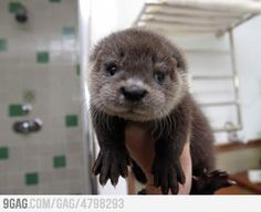 It's so cute!! I want one........seriously!!