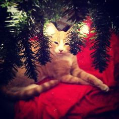 Seasons Greetings from under the tree!