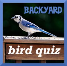 Get ready for bird watching and #GBBC by learning the names of your own backyard birds. Take this online quiz. Printables too.