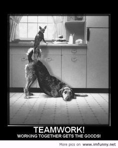 funny pics and quotes   Dogs teamwork - Funny Picture
