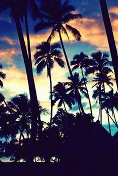 #Palmen #Farbenspiel