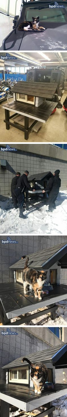 Boston Police Department's SWAT Build Cozy 'Condo' For A Friendly Stray Cat