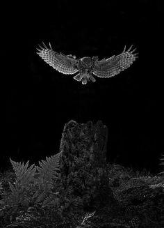 Señor de la noche