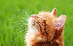 Gattini dalla nascita allo svezzamento, cosa fare La tua gatta è incinta? Ecco un interessante articolo per affrontare il parto e la crescita dei gattini nel miglior modo possibile. Dalla preparazione della cuccia, all'assistenza durante il parto,  #gattininascitasvezzamento