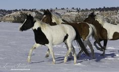 Three Day Fall Workshop at Black Hills Wild Horse Sanctuary ...