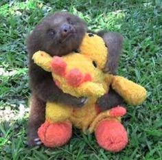 i want a sloth.