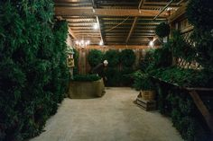 The holidays mean rooms filled with the wonderful smell of evergreen <Leslee Mitchell Photography> Christmas Traditions, Christmas Shopping, Evergreen, Garland, Christmas Tree, Rooms, Holidays, Holiday Decor, Photography
