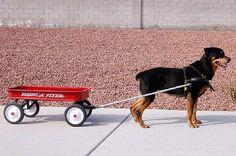 Agility Dog Walk For Sale Canada