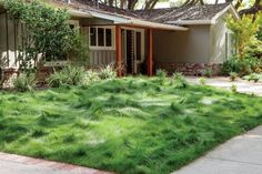 We love the breezy look of this low-water meadow. A mixture of fescues (sold as Eco-Lawn), it replaced thirsty lawn grass in Menlo Park, California garden. The hummocky texture is most evident when the grass is not mowed, but the blend benefits from shearing twice a year to eliminate seed heads. - See more at: http://westphoria.sunset.com/2015/02/16/7-easy-spring-planting-ideas-from-our-new-book/#sthash.uH9Vho5n.dpuf