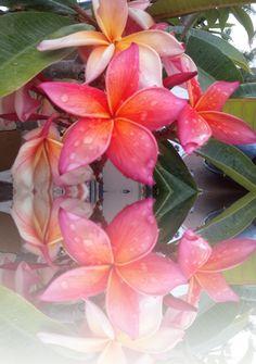 b0442583408b2 48 Best Hawaiian Fantasy images | Luau party, Birthday party ideas, Food