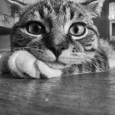 What a cute sassy cat! Original t-shirt design - Mary's Secret World - What a cute sassy cat! Original t-shirt design – Mary's Secret World What a cute sassy cat! Original t-shirt design Funny Cats, Funny Animals, Cute Animals, Silly Cats, Crazy Cat Lady, Crazy Cats, I Love Cats, Cool Cats, Beautiful Cats