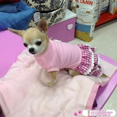http://www.petclothings.com/pink-dog-dress-with-lace-skirt.htm