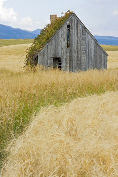Broke Down Beauty, a.k.a. the Butt of the Barn by A. M. Ruttle