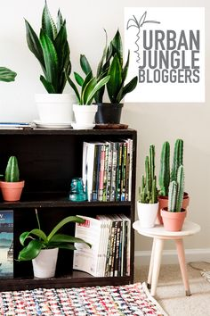 My houseplant collection. Well, part of my houseplant collection. Come take a look at my cacti and my little fiddle leaf fig that I propagated from a stick! #urbanjunglebloggers #plantshelfie