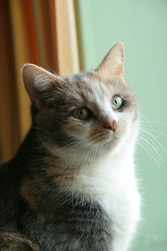 """""""Cats possess numerous charms and anyone who has ever loved a cat has fallen for its magic."""" --Susan Easterly"""