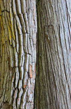 Tree Bark by Jane Inman Stormer