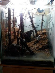 This guy took some tree branches and made one of the coolest fish tank environments I've ever seen! Cool Fish Tanks, Forest Habitat, Tree Branches, Habitats, Aquarium, Leaves, Nature, Diy, Do It Yourself