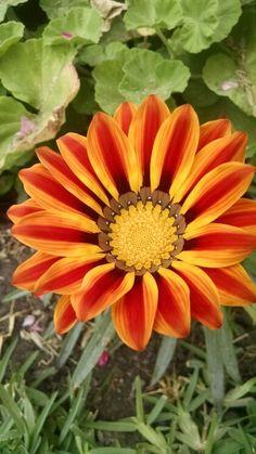 Lo tome en mi jardín,  es bello.