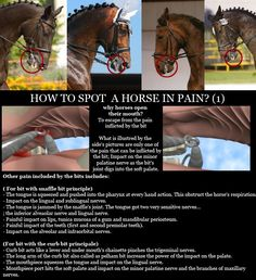 Bits can be harmful tools in the wrong hands. This is why you should learn to ride and guide your horse without one before attempting contact. The bit is a refinement tool to be used with the right precision, lightness and feel. Horse Tips, My Horse, Horse Love, Cane Corso, Sphynx, Arte Equina, Pitbull, Horse Facts, Facts About Horses