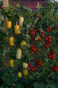 vertical vegetable garden ideas plants tomatoes pumpkins #Vegetablegardendesign #growingtomatoesvertically #vegetablegardeningideas #verticalvegetablegardens