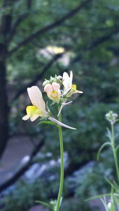Blumenwichtel von Susanne