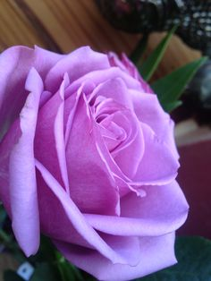 Valentine's flower Summer Photos, My Photos, Delicate, Roses, Valentines, Flowers, Plants, Valentine's Day Diy, Summer Pictures