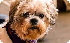 87 Best Adopt A Pet Images On Pinterest Adoption Foster Care