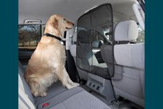 drive safely while cruisin with your furry buddy...smart idea.
