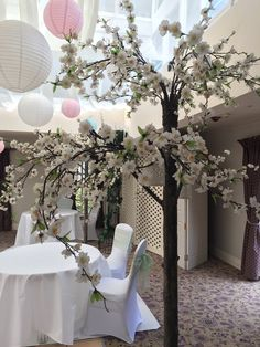 Dainty blossom trees make a beautiful ceremony room without being too overpowering, 7.5ft tall.