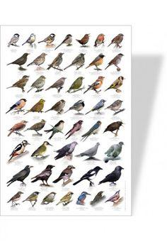 poster nature oiseau - Achat Nature