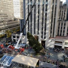A top view as crowds gather to watch as a crane hoists the 75-foot Norway Spruce Rockefeller Center tree upright in New York, NY, on November 11, 2017. (Anthony Behar/Sipa USA)