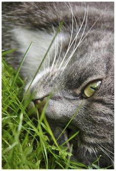 """""""Nothing can bring back the hour of splendor in the grass...."""" --William Wordsworth"""