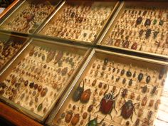 Beetles/collections